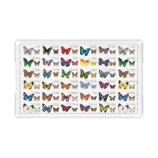 Butterflies of the World Acrylic Tray