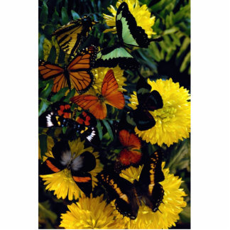 Butterflies on chrysanthamums photo cut out