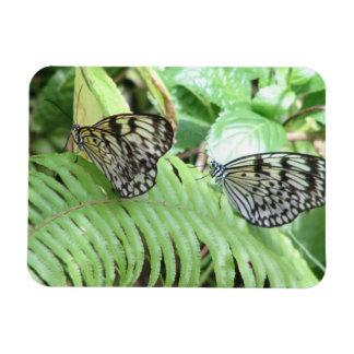 Butterflies on Fern Magnet Magnet