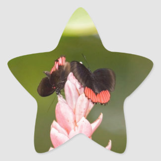 Butterflies on Pink Flower Star Sticker