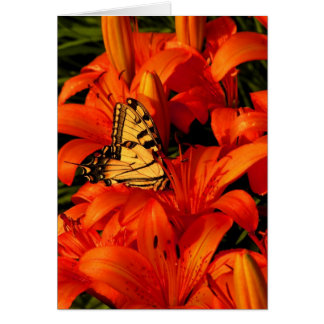 Butterflies on Tiger Lilies Greeting Card