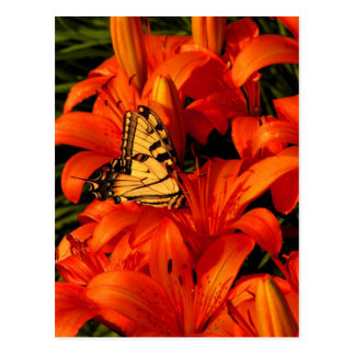 Butterflies on Tiger Lilies Post Cards
