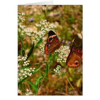 Butterflies on White Flowers Card