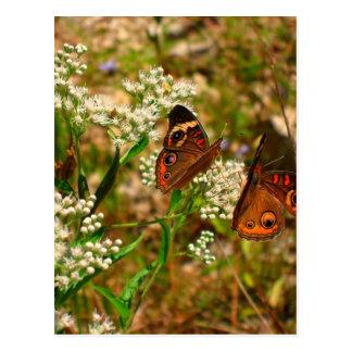 Butterflies on White Flowers Postcard