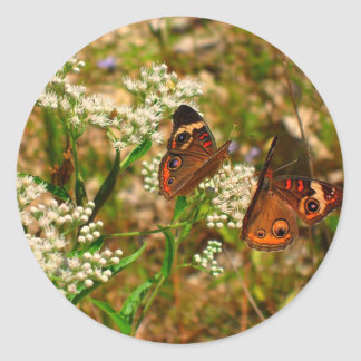 Butterflies on White Flowers Round Stickers