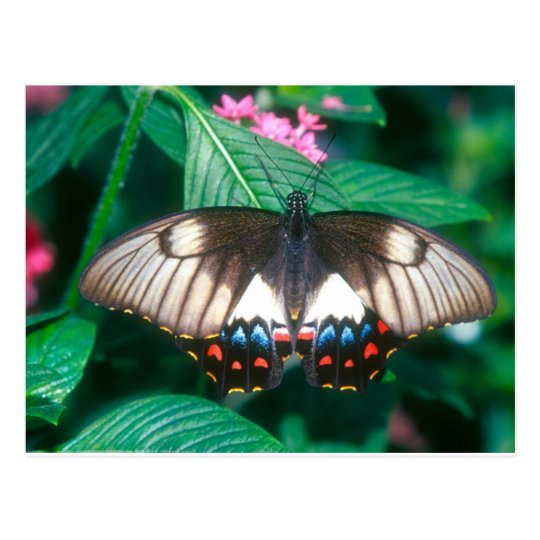 butterflies orchard butterfly postcard