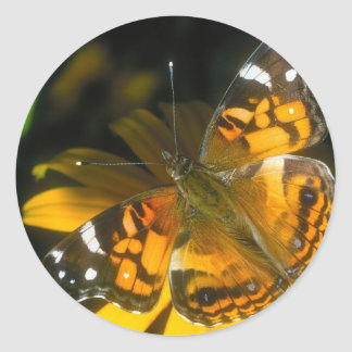 butterflies painted lady classic round sticker