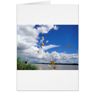 butterflies pierides amazon river card