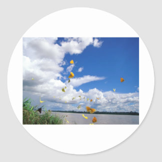 butterflies pierides amazon river classic round sticker