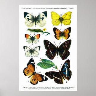 """Butterflies Plate II 24"""" x 36"""" Poster"""
