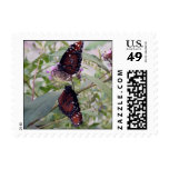 Butterflies Postcard Small Postage