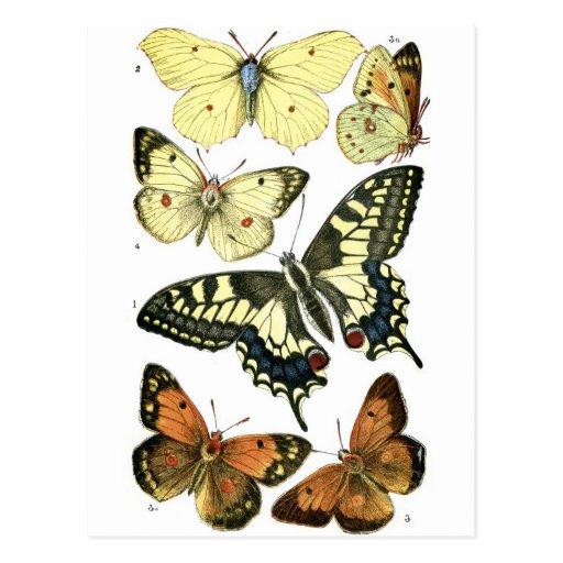 Butterflies Postcards