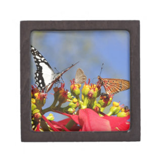 Butterflies Premium Jewelry Boxes