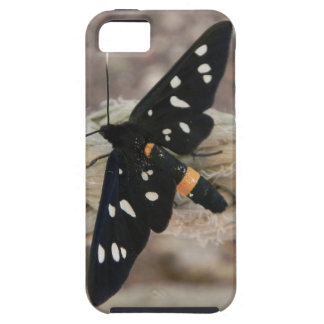 Butterflies priest iPhone SE/5/5s case