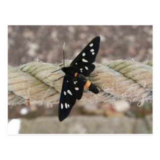 Butterflies priest postcard