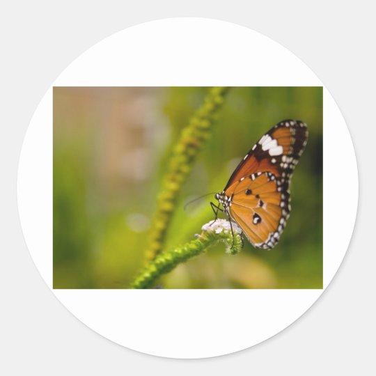butterflies red admiral classic round sticker
