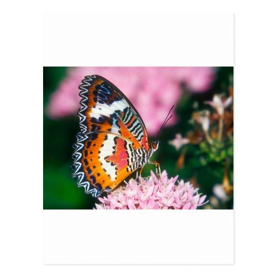 butterflies red lacewing butterfly postcard
