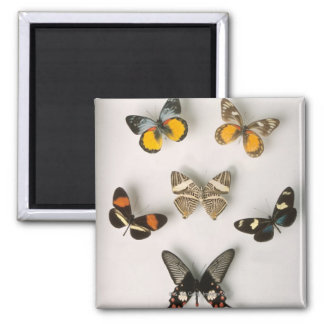 Butterflies scattered 2 inch square magnet
