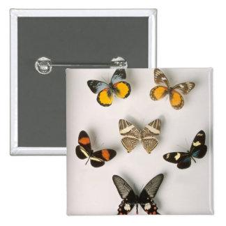 Butterflies scattered button