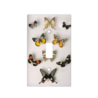 Butterflies scattered light switch cover