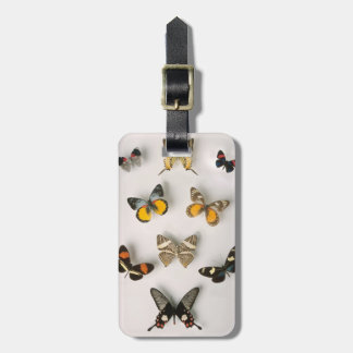 Butterflies scattered luggage tag