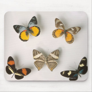Butterflies scattered mouse pad