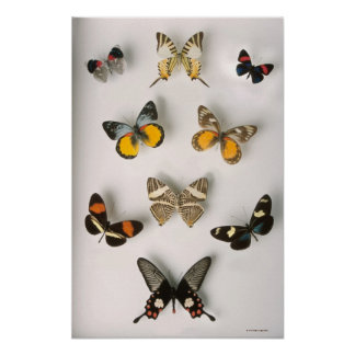 Butterflies scattered poster