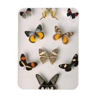 Butterflies scattered rectangular photo magnet