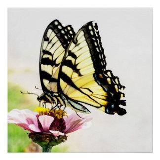 Butterflies Sharing a Flower Poster