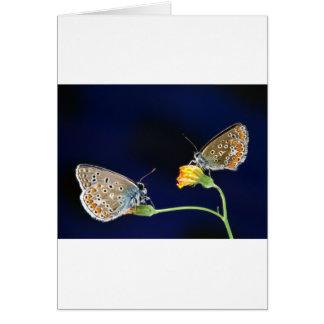 butterflies spring fling greeting card