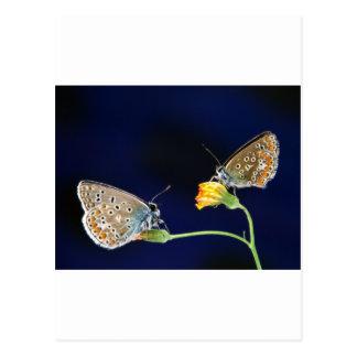 butterflies spring fling postcard