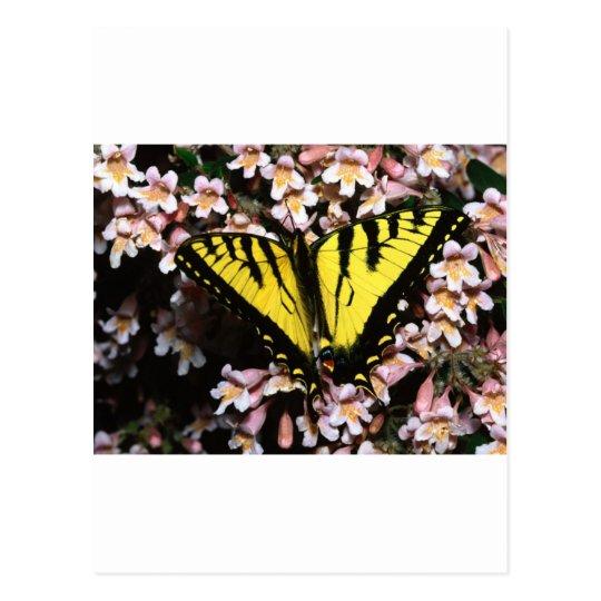butterflies tiger swallowtail postcard