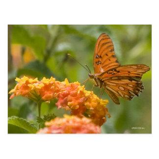 Butterfly022 Tarjeta Postal