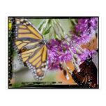 butterfly1 tarjeta postal