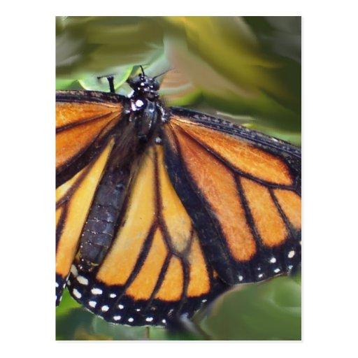 butterfly1 tarjetas postales