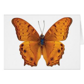butterfly 03 card