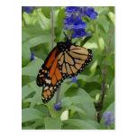 Butterfly _176 Blank Postcard