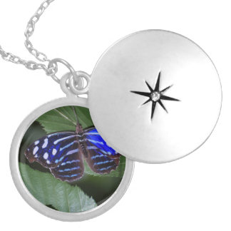 butterfly-272.jpg medallón