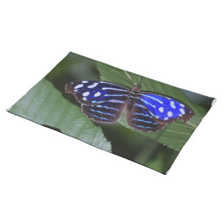 butterfly-272.jpg placemat