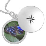 butterfly-272.jpg round locket necklace