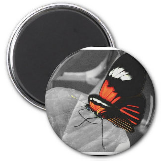 Butterfly 2 Inch Round Magnet