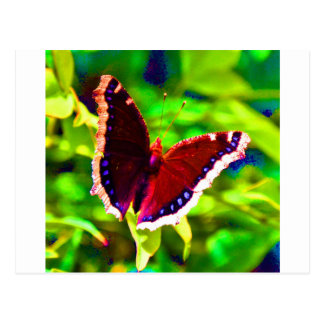 Butterfly 2.JPG Postcard