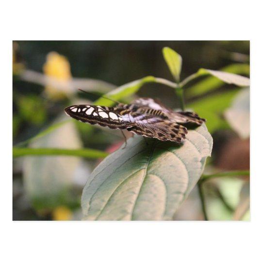 Butterfly # 2 postcard