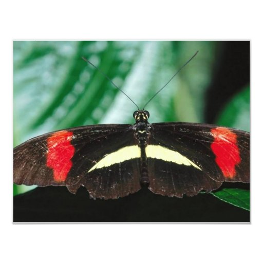 Butterfly 4.25x5.5 Paper Invitation Card
