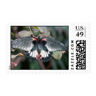Butterfly 4 stamps