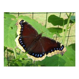 Butterfly 56 ~ postcard