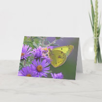 Butterfly 7 x 5 Greeting Card - blank