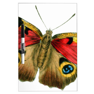 butterfly-9-eop pizarras