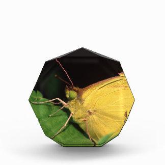 butterfly acrylic award