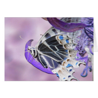 Butterfly altered greeting card